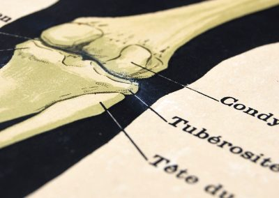 19th Century Anatomical Lithograph Poster 11