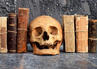 The Human Skull 003 2