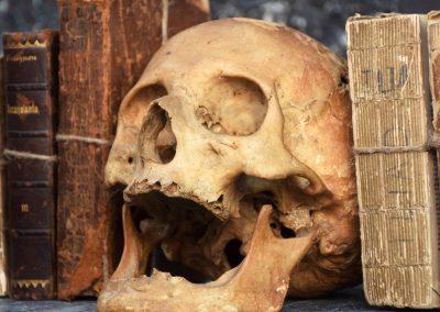 The Human Skull 003 5