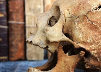 The Human Skull 003 9