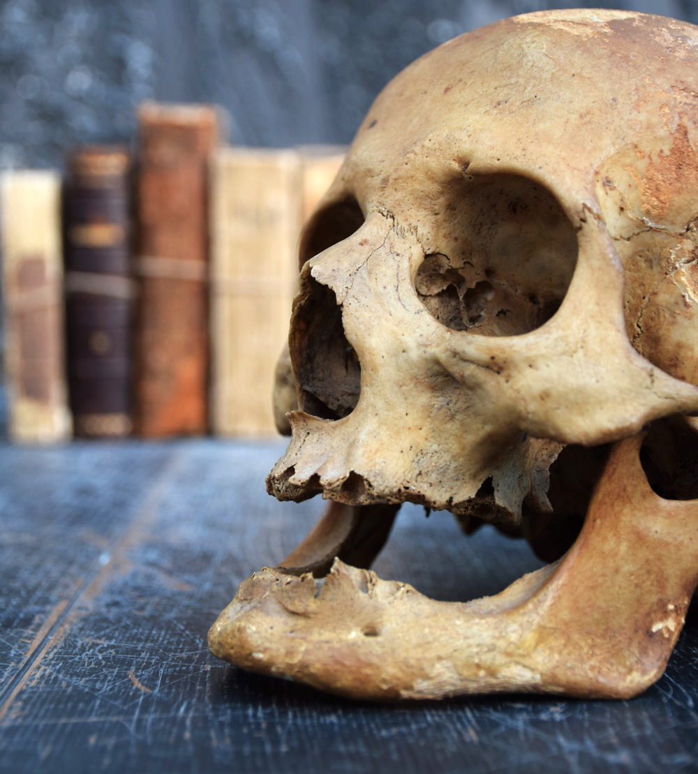 The Human Skull 003