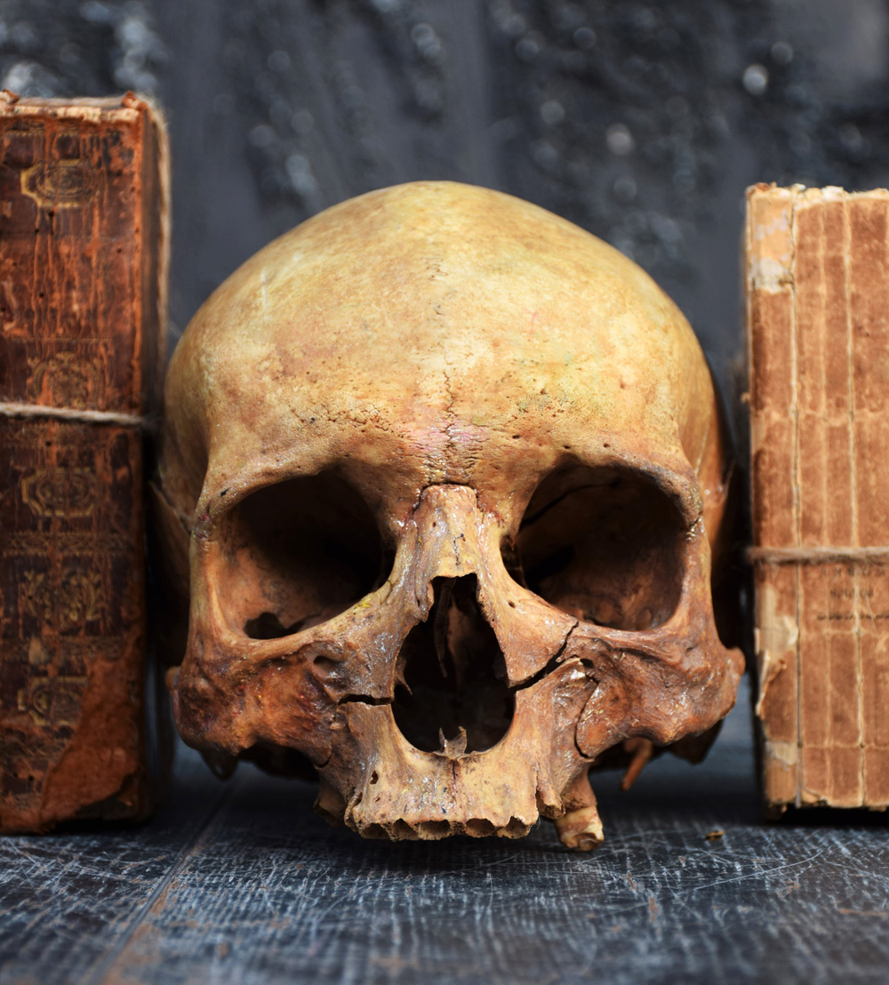The Human Skull 004