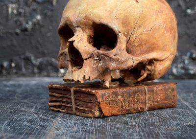 The Human Skull 004 6
