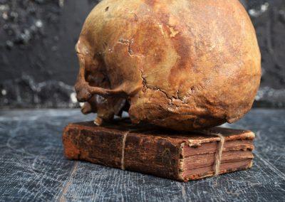 The Human Skull 004 11
