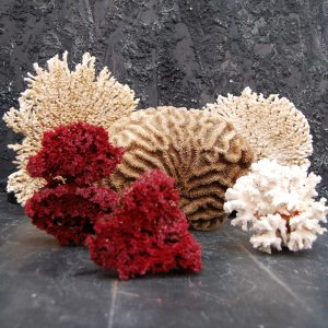 Collection of Rare Corals
