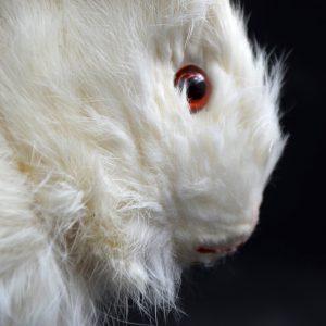 Roulette Decamps Rabbit (Sold)