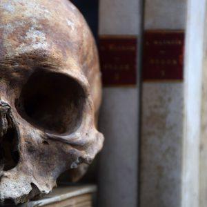 Human Skull #5 (Sold)