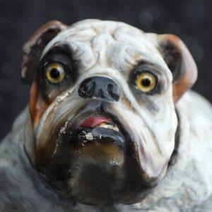 Bulldog c.1900