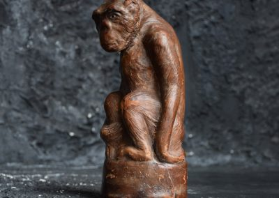 Curious Monkey c