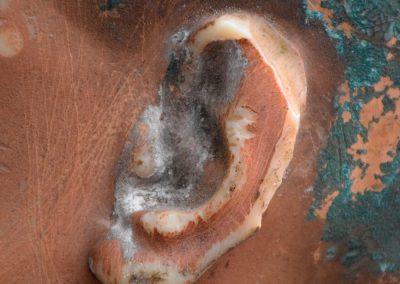 Wax Mannequin Head 8